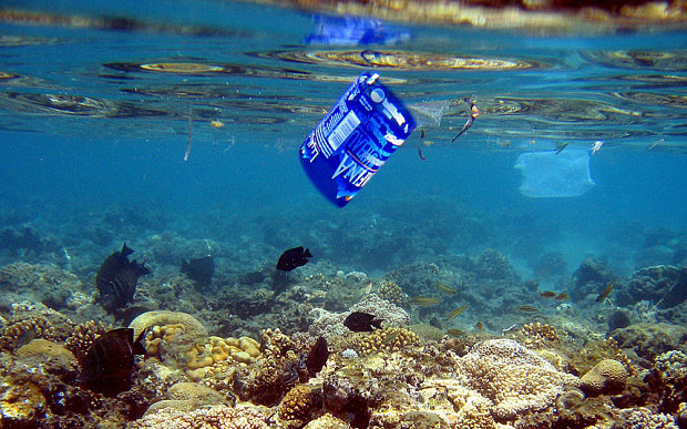 Fish swim among the coral near a water bottle label and a plastic bag off the coast of the Red Sea resort town of Naama Bay, Egypt    Photo: EPA/MIKE NELSON