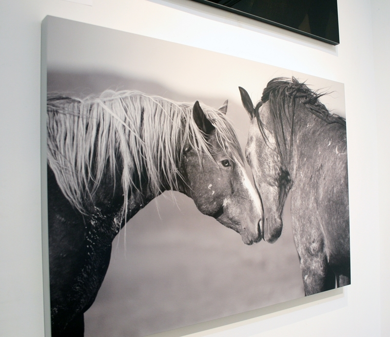 "A side view of Kimmerlee Curyl's ""Equus (Equal Us)"" Metal Sublimation Print."
