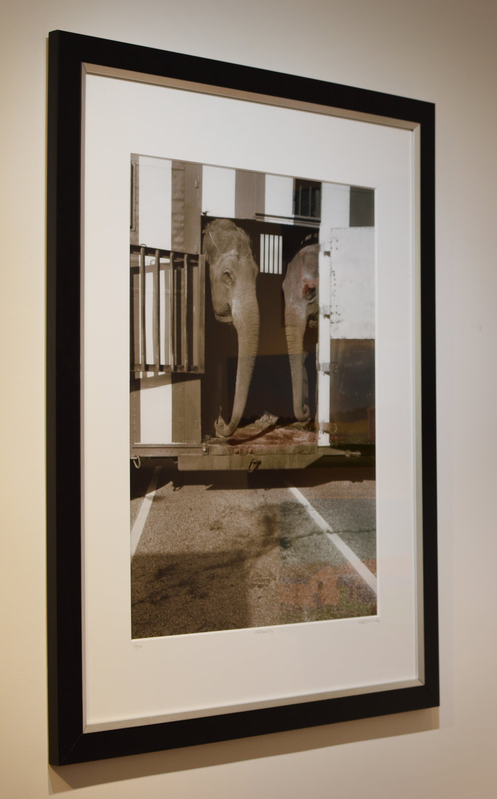 "Stephen Ciuccoli's ""Elephants"" Hahnemühle Photo Luster Print framed in black with a 1/2"" inch silver scoop lip and 2"" mat."