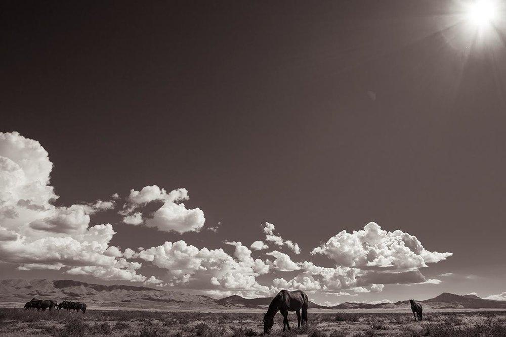 Desert Sanctuary by Kimerlee Curyl