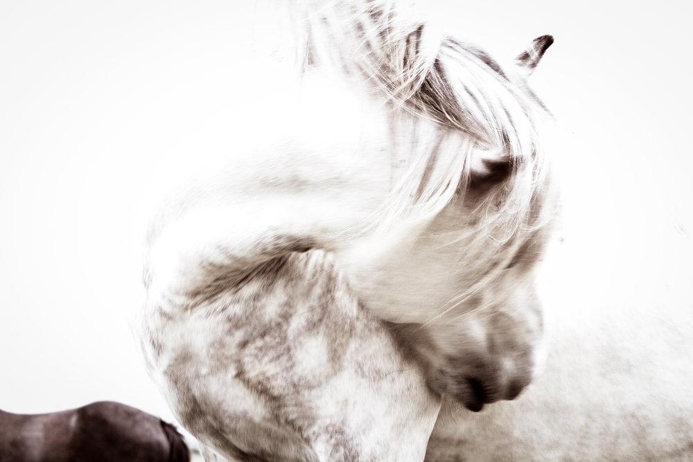 Wild Wind Study by Kimerlee Curyl