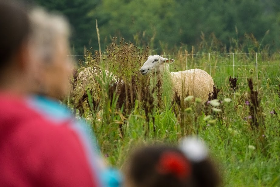 Sheep and People, Photo- Jonas Powell.jpg