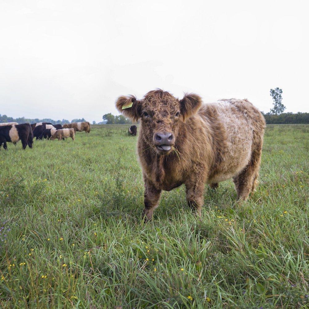 Livestock -