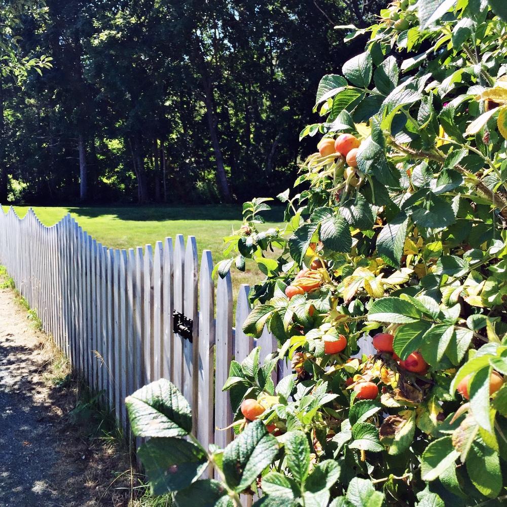 White picket done so, so right in Bar Harbor, Maine - The Pastiche