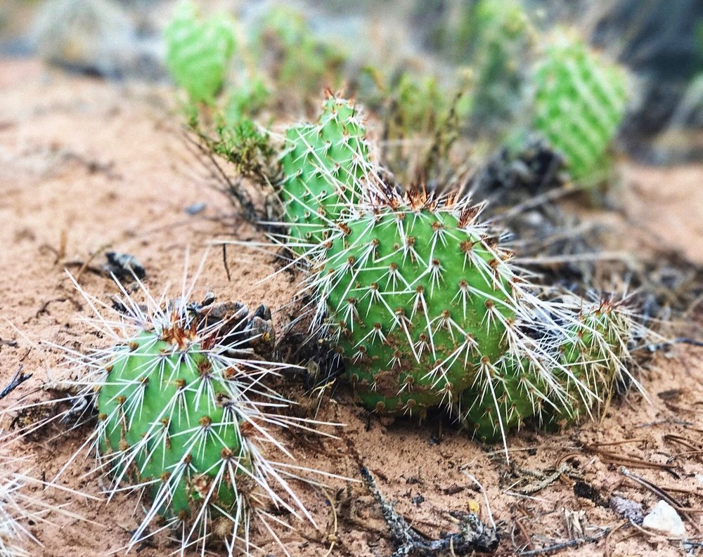 The coolest cacti all over the park