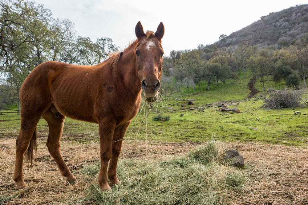 Wasim Muklashy Photography_Three Rivers Ranch_Around_24.jpg