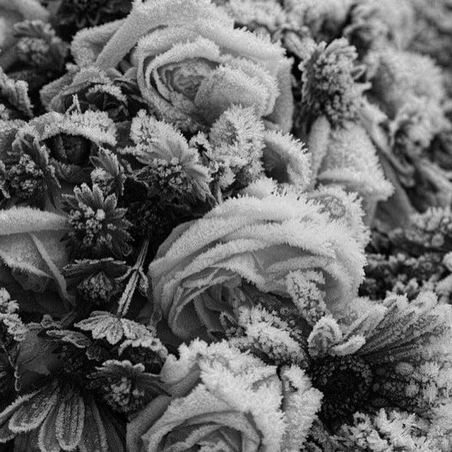 #flowers#blackandwhite#love#brand#dubai#paris#new