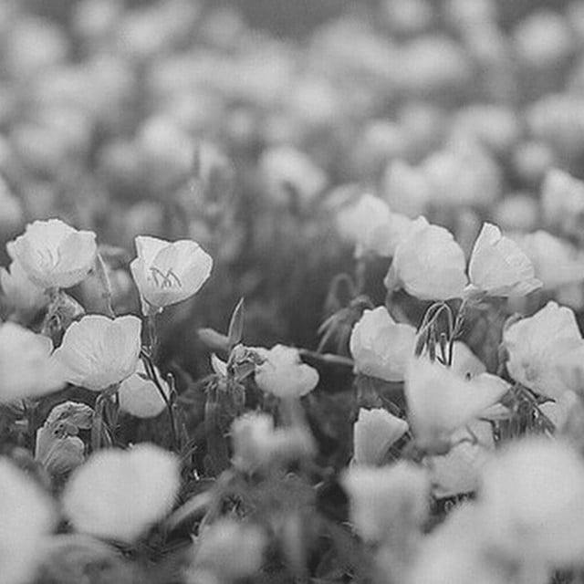 🌹🌷 #flowers #morning #dubai#paris#jeddah #new#brand