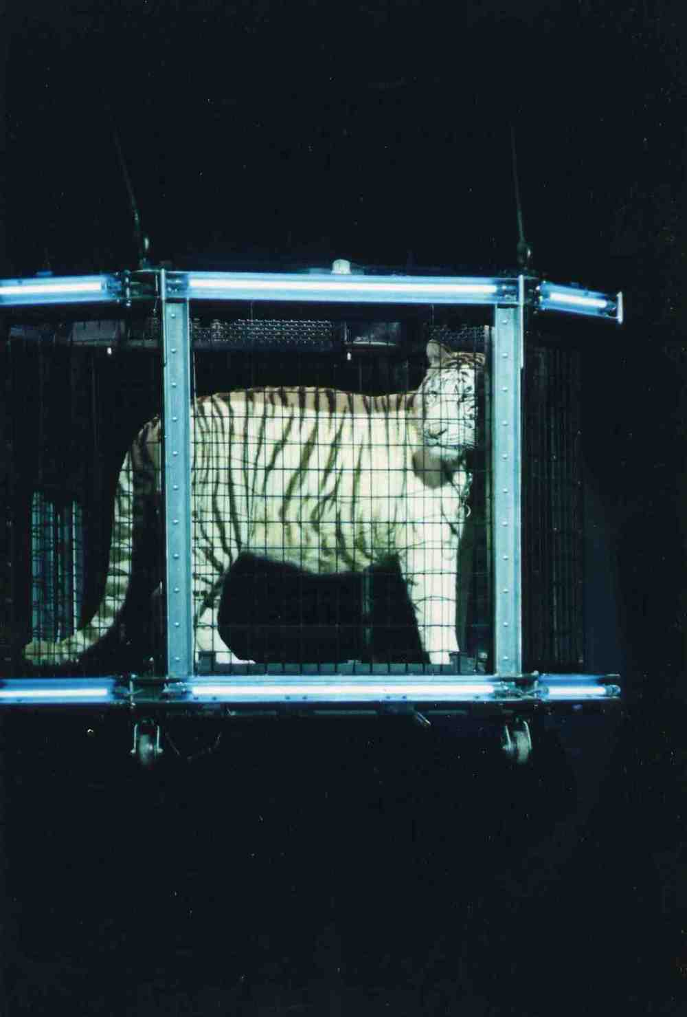 Dirk ariel cage.jpg