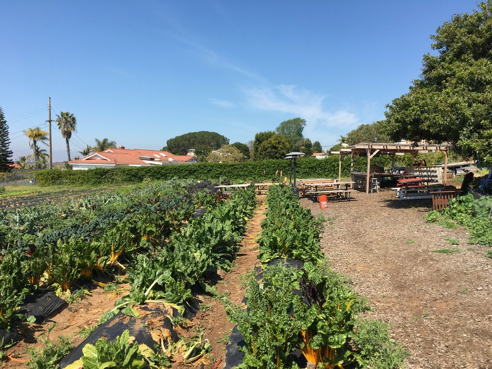 CYCLOPS FARM CERTIFIED ORGANIC FARM LOCATED IN OCEANSIDE AND OPEN EVERY SATURDAY.