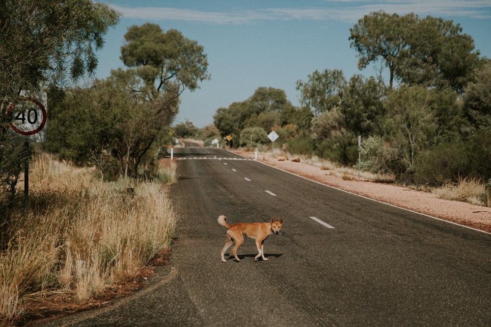 Outback(107von211).jpg