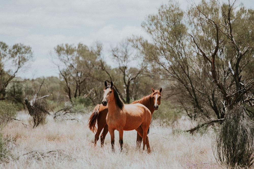 Outback(161von211).jpg