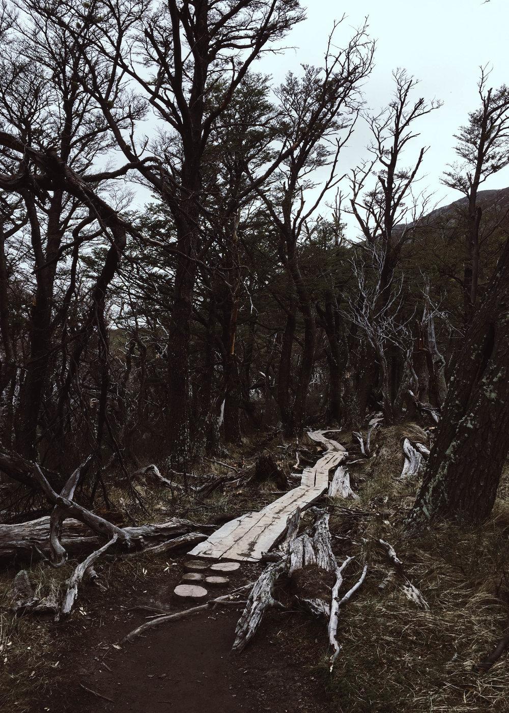 Patagonien_ElChalten_JocelyneBueckner_1.jpg