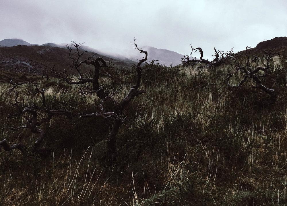 Patagonien_Torres+del+Paine_JocelyneBueckner_2.jpg