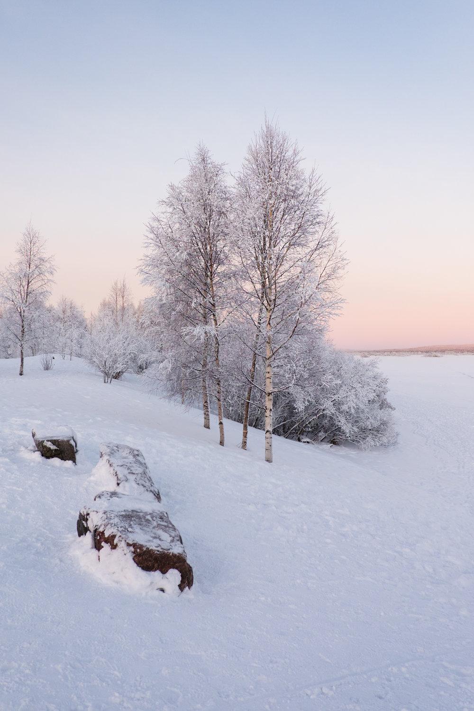 Lappland-VeWolff-5.jpg