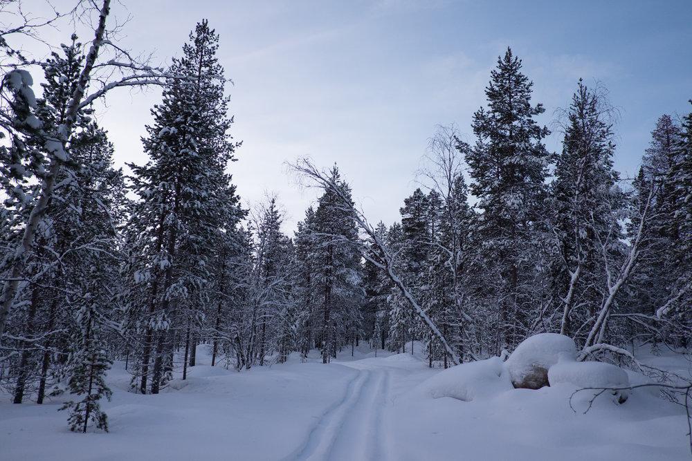 Lappland-VeWolff-10.jpg