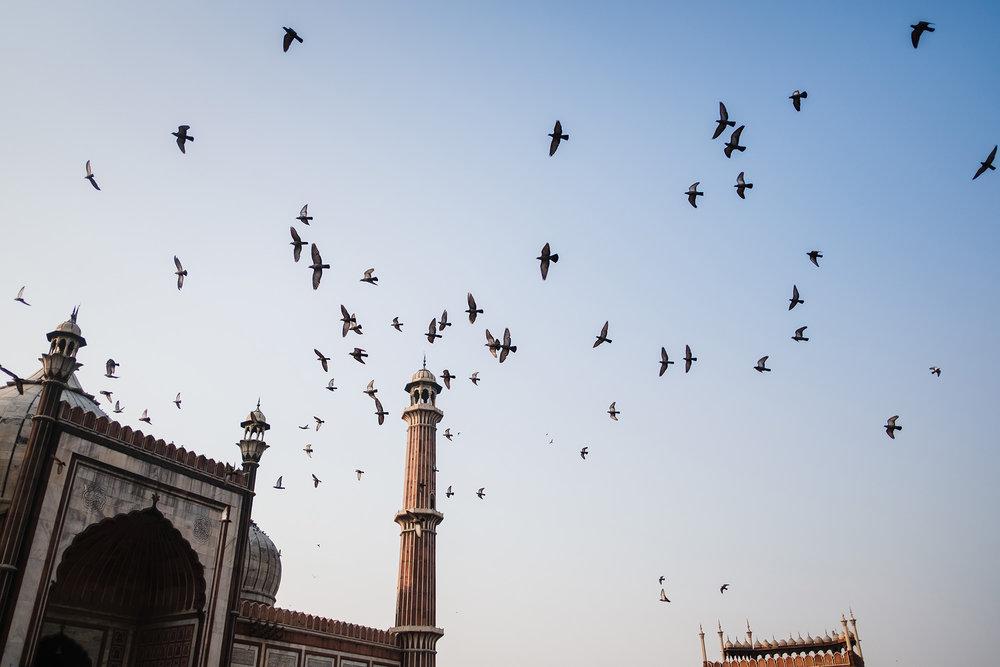 AnjaPoehlmann_India-Delhi_008.jpg