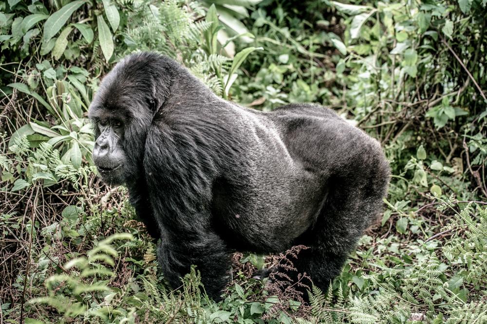 Ruanda chris frumolt 2015-44.jpg