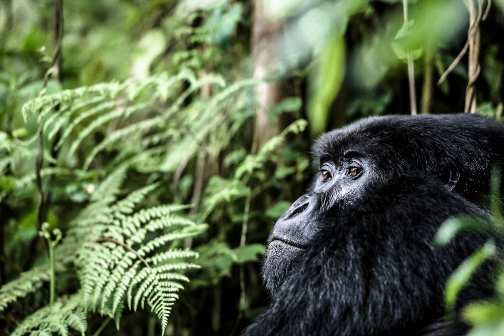Ruanda chris frumolt 2015-48.jpg