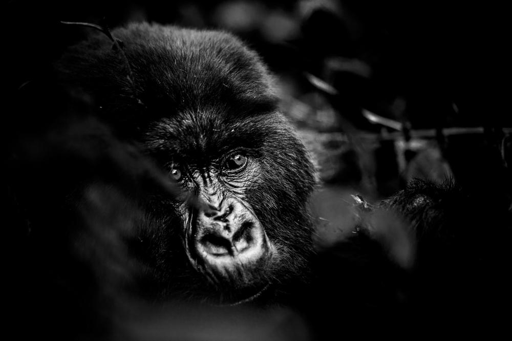Ruanda chris frumolt 2015-42.jpg