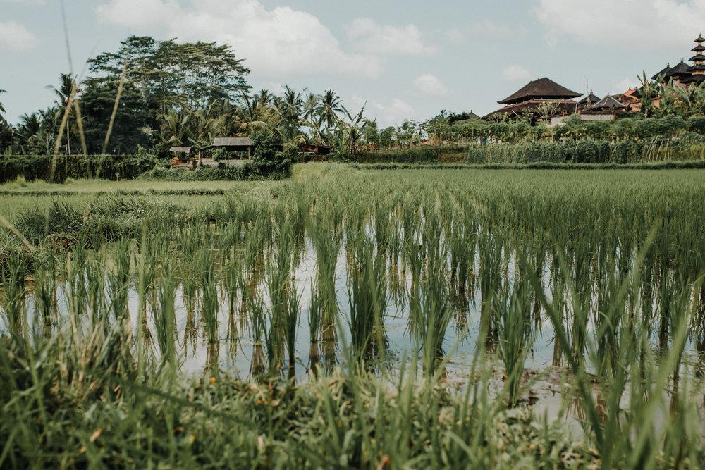 Fernweh_Bali (8).JPG