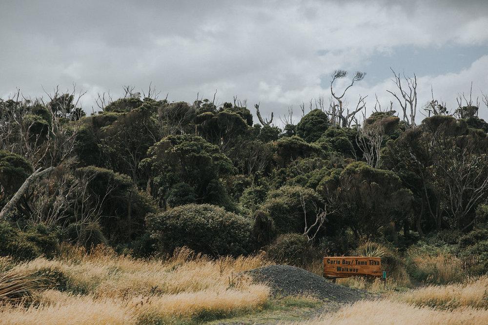 NeuseelandTeil2(128von241).jpg