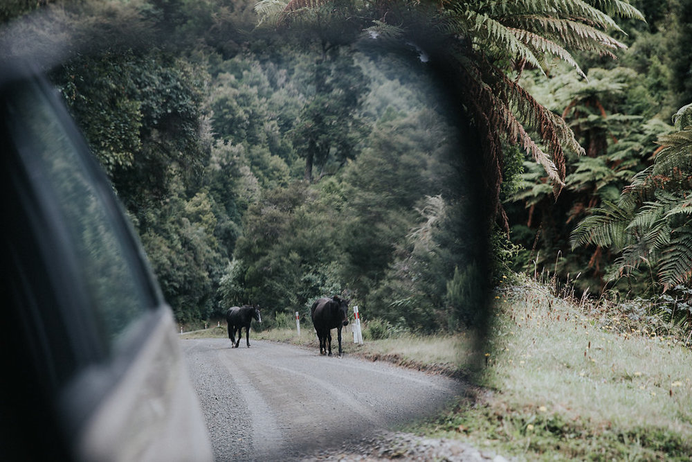 NeuseelandTeil3(103von264).jpg