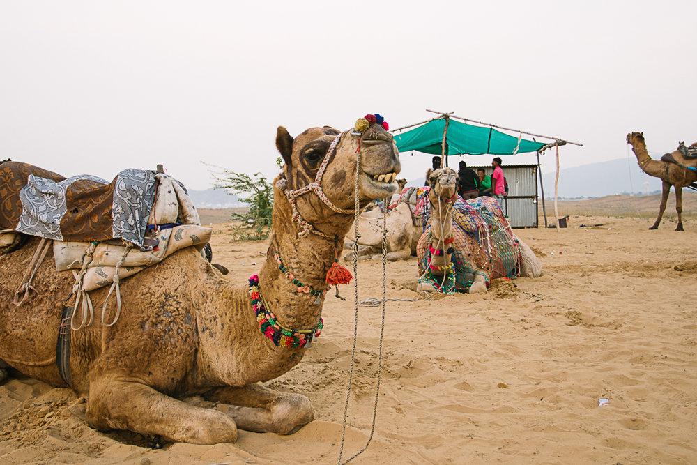 AlineLange_Indien_143.jpg