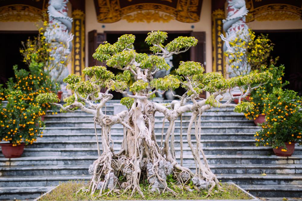 vietnam_travel_asia_hyatt_saigon_hoian_geo_036.jpg