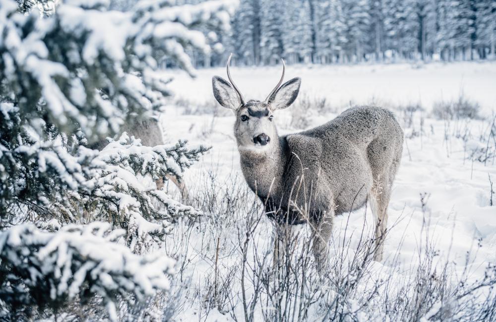 Banff National Park-6.jpg
