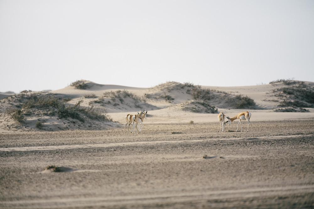 Namibia_Skeletoncoast_Julia_Hofmann_QF_037.jpg