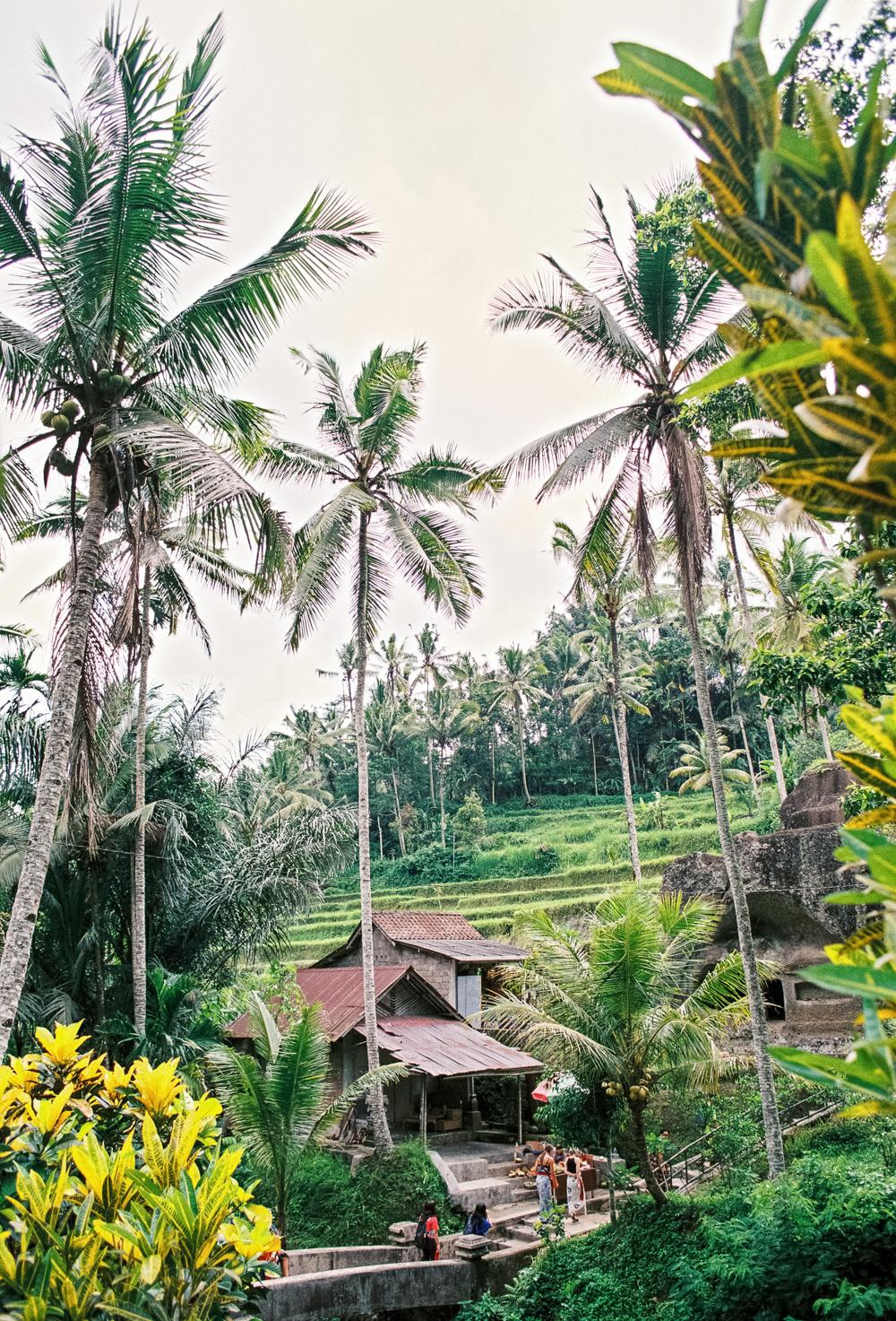 Rocky Temple – Gunung Kawi227_0265.jpg