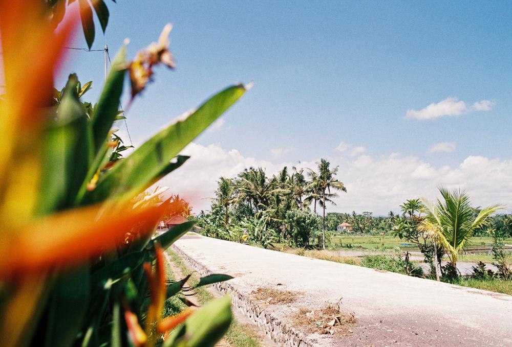 Ubud - Rice Fields - Cafe Pomegranate -227_0317.jpg