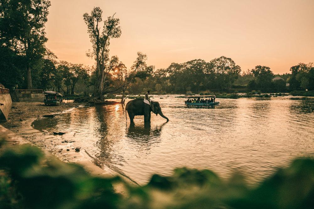 India-Coorg-Elephant Sanctuary-2017.jpg