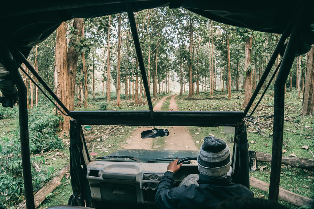 India-Coorg-Safari-2017.jpg