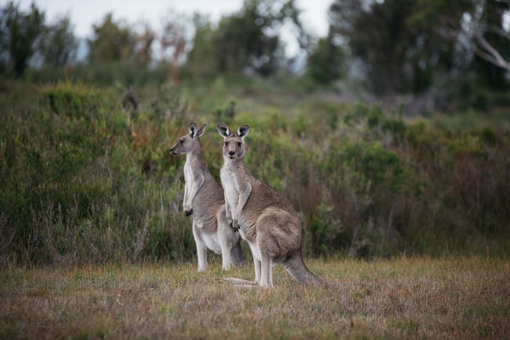 Australia_melina (13 von 88).jpg