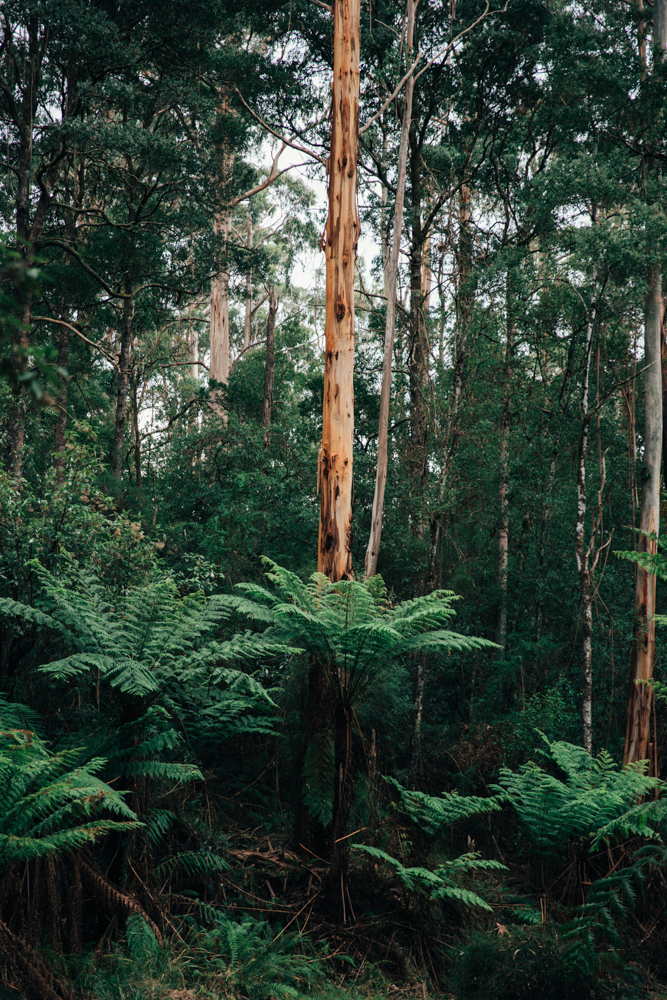 Australia_melina (24 von 88).jpg