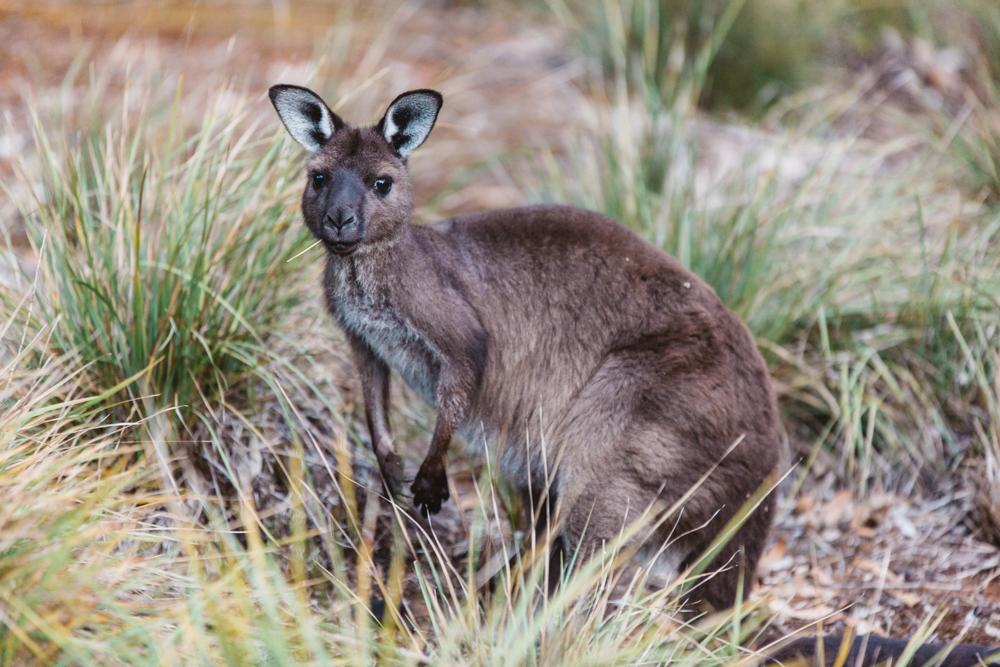 Australia_melina (54 von 88).jpg