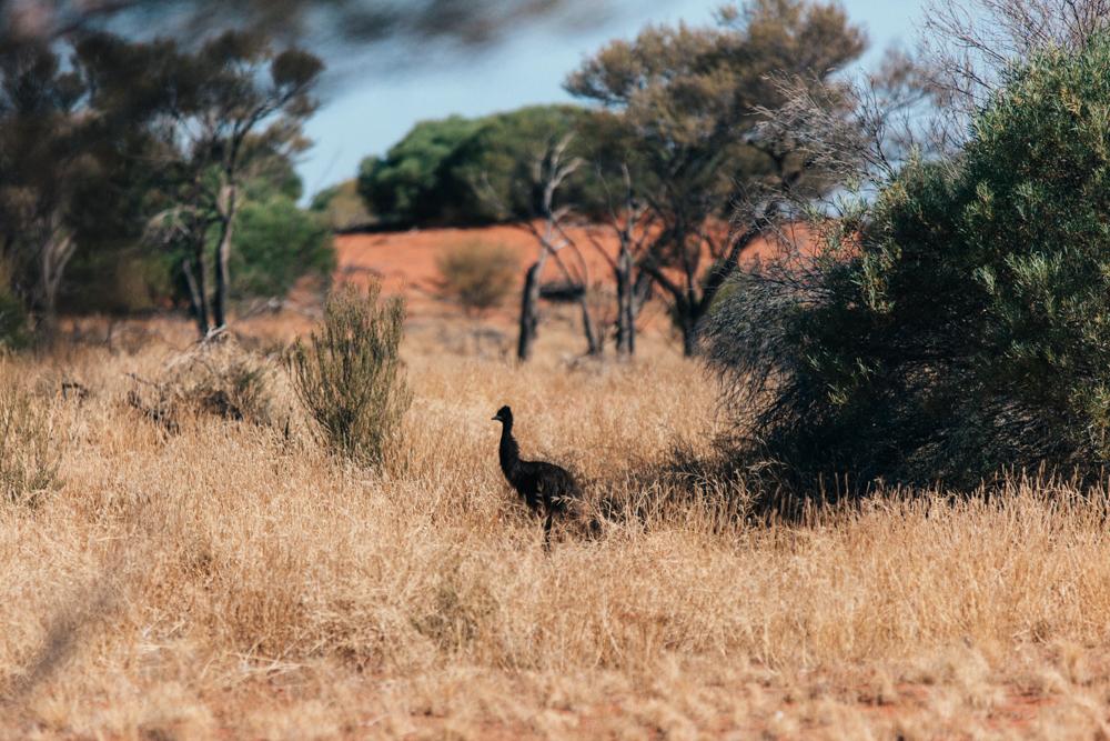 Australia_melina (70 von 88).jpg