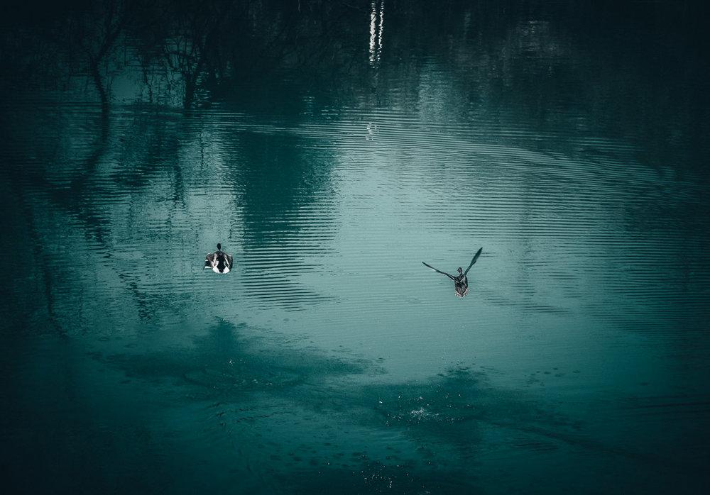 Frühling Blauer See_1.jpg
