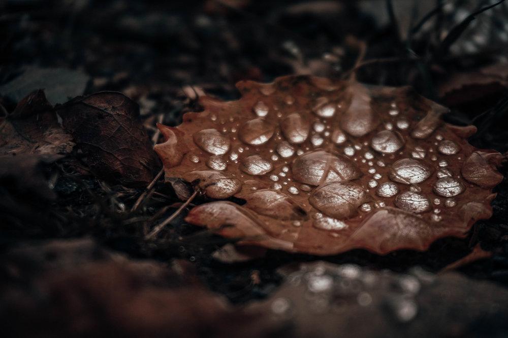 Herbst Hahnenklee_2.jpg