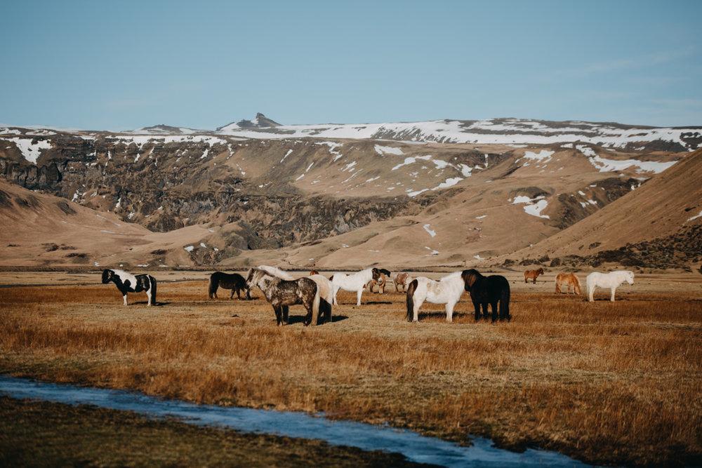Island Reise_Blog (311 von 369).jpg