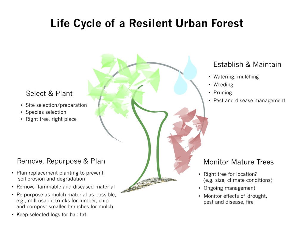 Life Cycle TreeUpdated-03.jpg