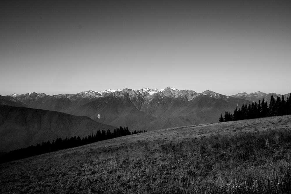 The Olympic Range from Hurricane Ridge.
