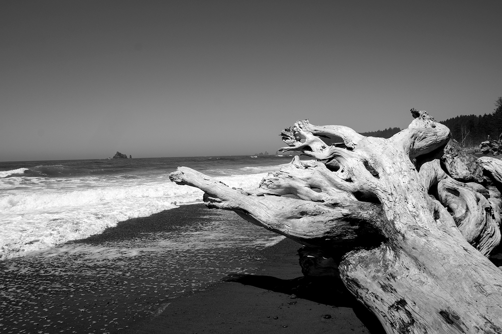 Ancient Driftwood on the Olympic Coast, Rialto Beach, WA    Prints available upon request