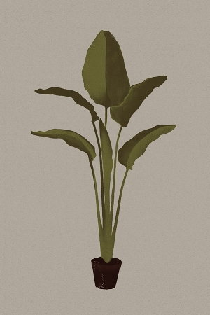 plant Behance.jpg