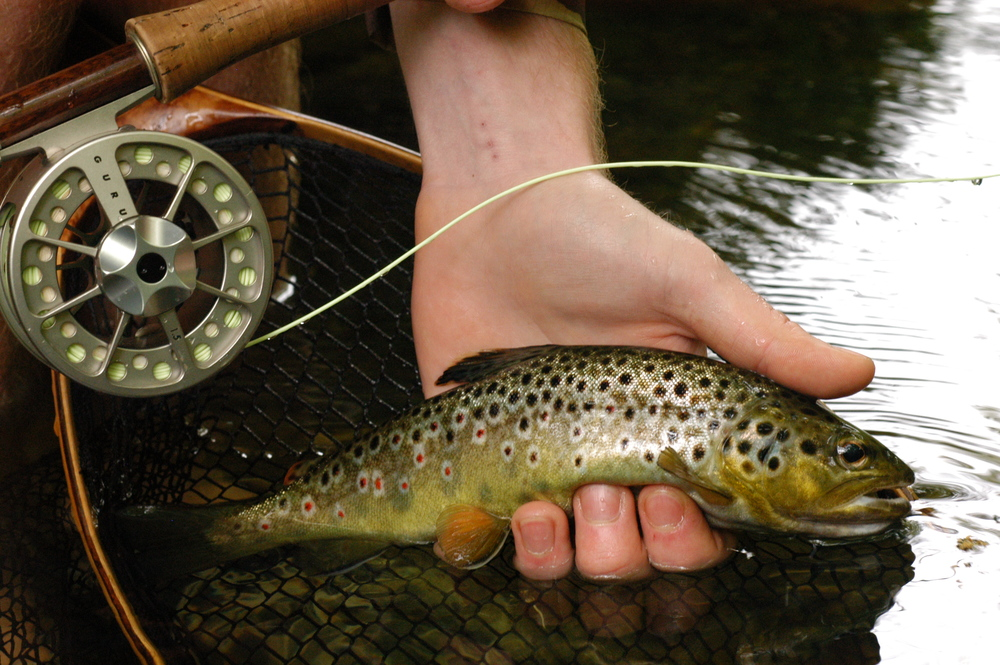 A Stunning Brownie, expertly out-whitted by David.