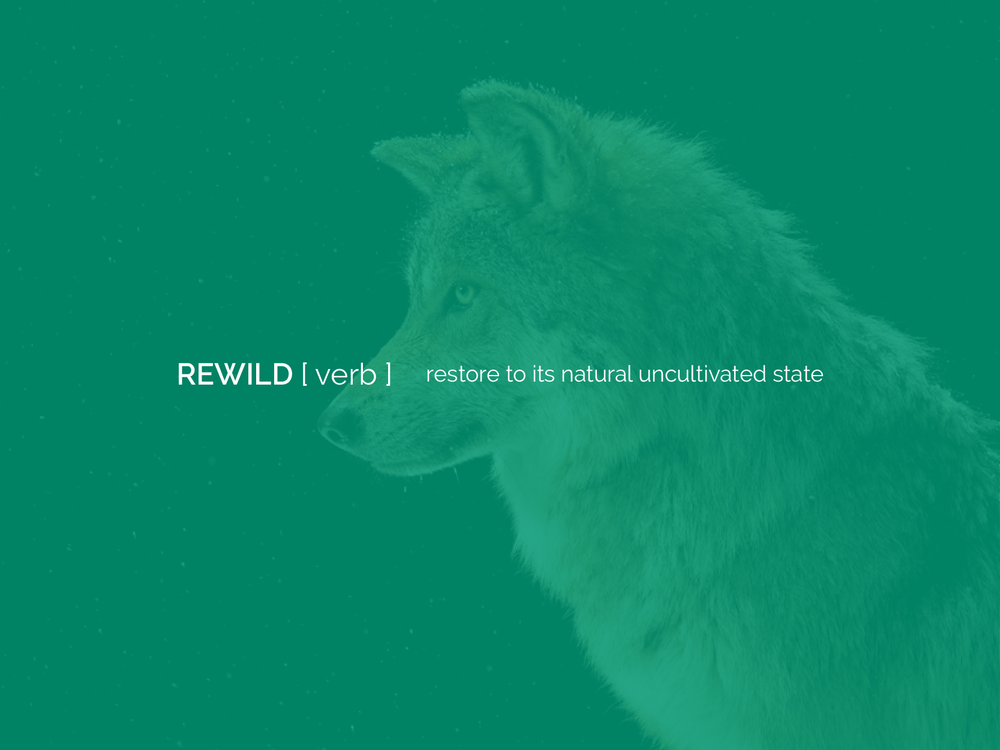Rewild, definition