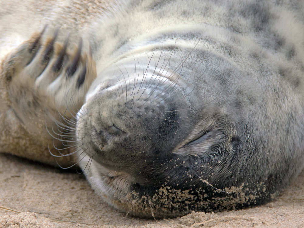 SEALS_3.JPG