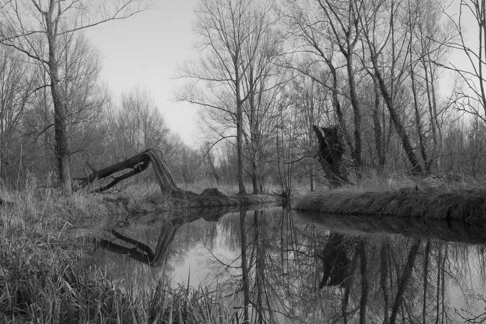 UEA Broad Nature Trail .jpg
